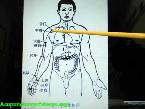 Acupuncture NYC - Chinese Acupuncture Meridian - Points Lessons by Dr. Frank Zhao