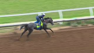 Arrogate Drills at Del Mar 8/14/17 for TVG Pacific Classic