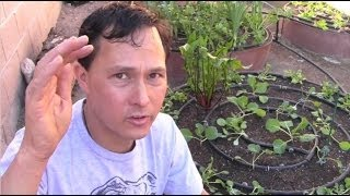 Is Pressure Treated Wood Safe As A Raised Garden Bed? & More Gardening Q&a