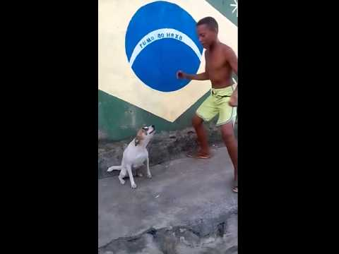 [Haiku] Dancing doggy