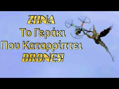Ζήνα- το γεράκι που καταρρίπτει τα ύποπτα drones the falcon that shoots down suspected drones