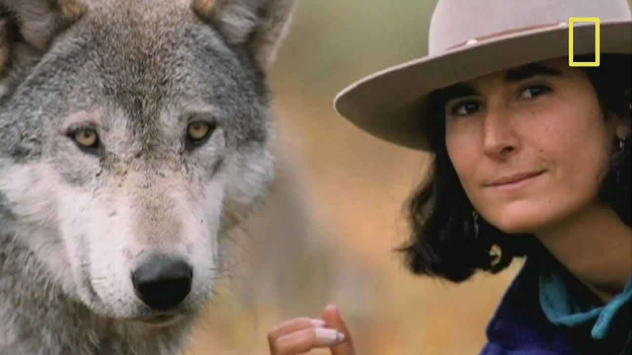 jamie wolf videos