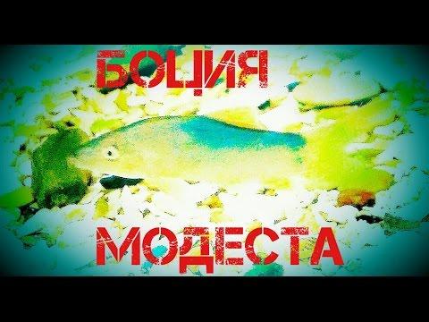 Аквариумные рыбки.Боция .Боция Модеста