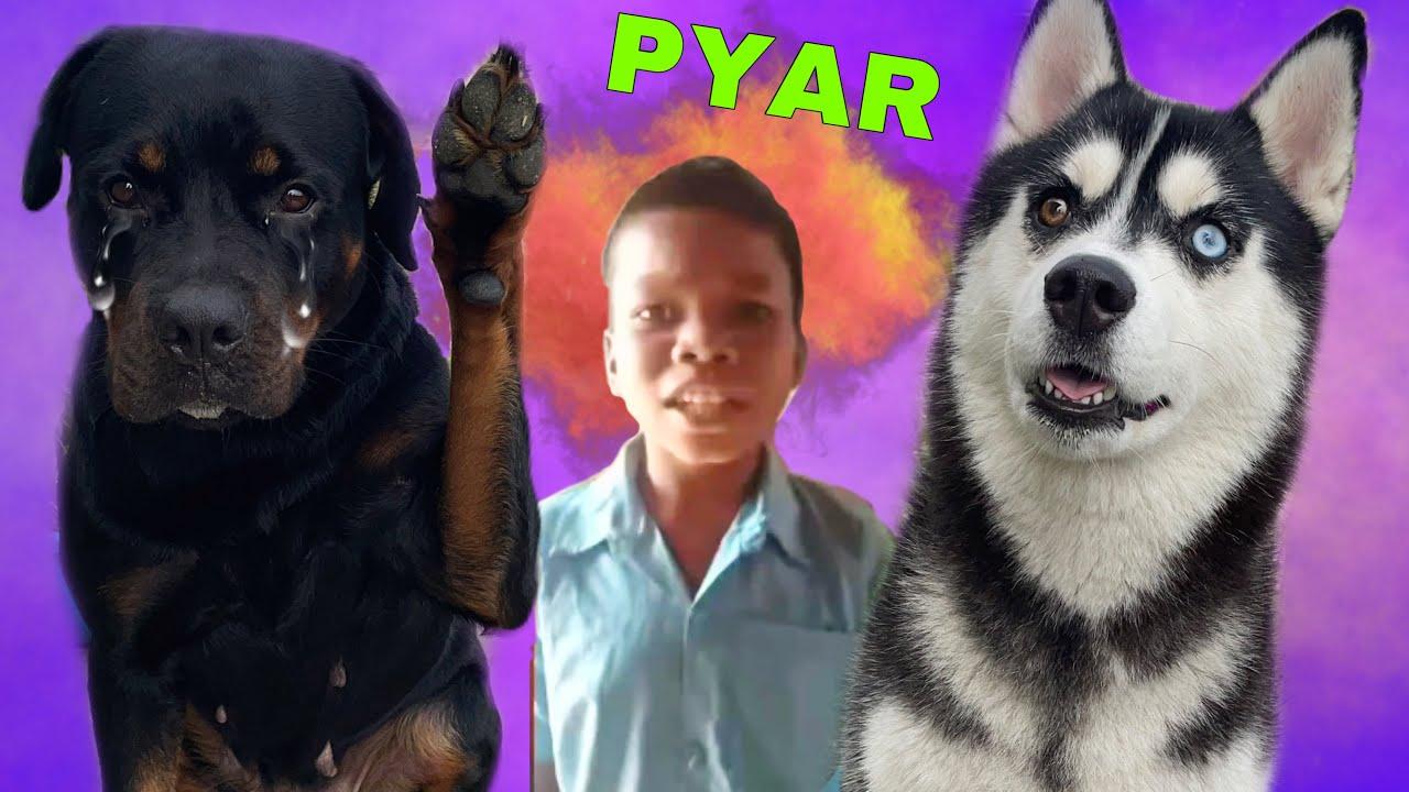 BACHPAN KA PYAR ROXY KA | Dog can talk part 135 | Roxycheeni | Husky. Rottweiler | Review reloaded