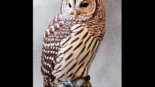 Unbelievable Wood Carvings Of Birds You Have To See To Believe At Natureswings.org