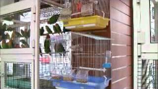 Royal House Birds Pets البيت الملكي لطيور والحيوانات الاليفة