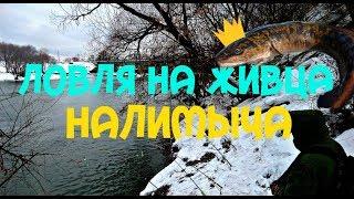 Ловля налима в марте- Ловля на живца-Ловля на реке Сура