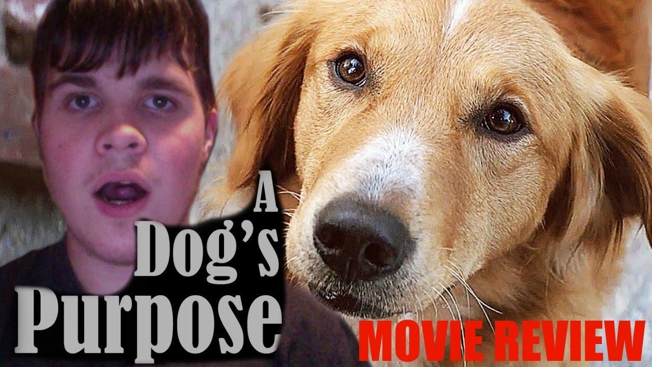 Watch Free Movie A Dog S Purpose
