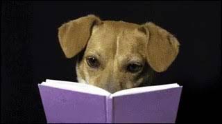 Когда собака поняла что она кастрирована