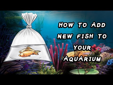 How To Add New Fish To Your Aquarium / Fish Tank