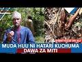 Gambar cover MUDA HUU NI HATARI KUCHUMA DAWA ZA MITI |SHEIKH YUSSUF BIN ALLY