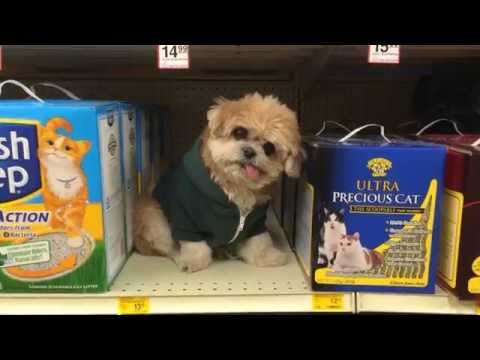 Marnie the Dog goes shopping for cat supplies