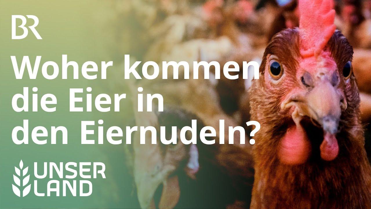 Woher kommen die Eier in den Eiernudeln? | Unser Land | BR Fernsehen