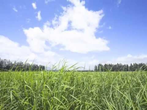 Bukit Berbunga - Uci Bing Slamet