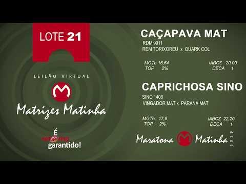 LOTE 21 Matrizes Matinha 2019