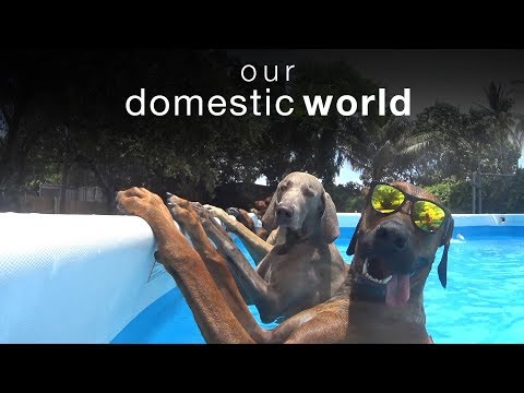 Animal Challenges & The Pool | Our Domestic World