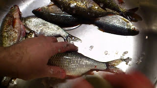 Чистим рыбу без проблем (чешуя не разлетается)
