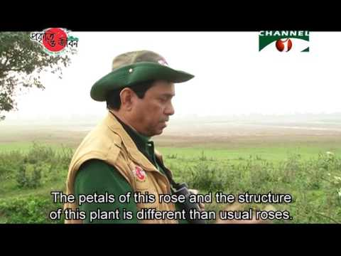 Nature and Life - Episode 246 (Wild Flowers of Bangladesh)