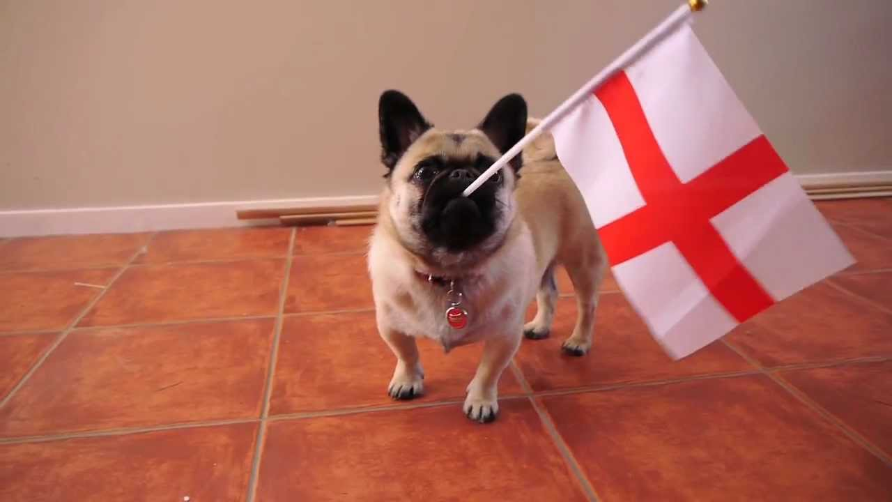 2482cccfb76f9 Rugby World Cup Pug - YouTube
