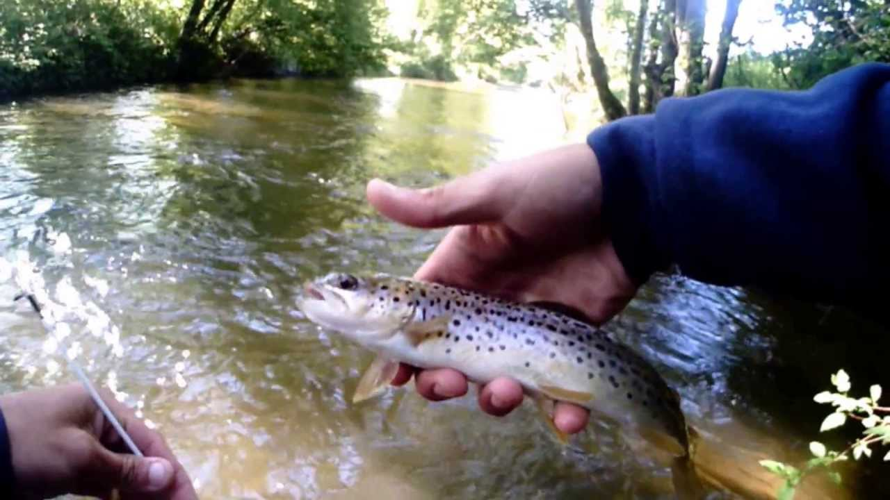 Mitchell river trout fishing nc youtube for Nc trout fishing regulations