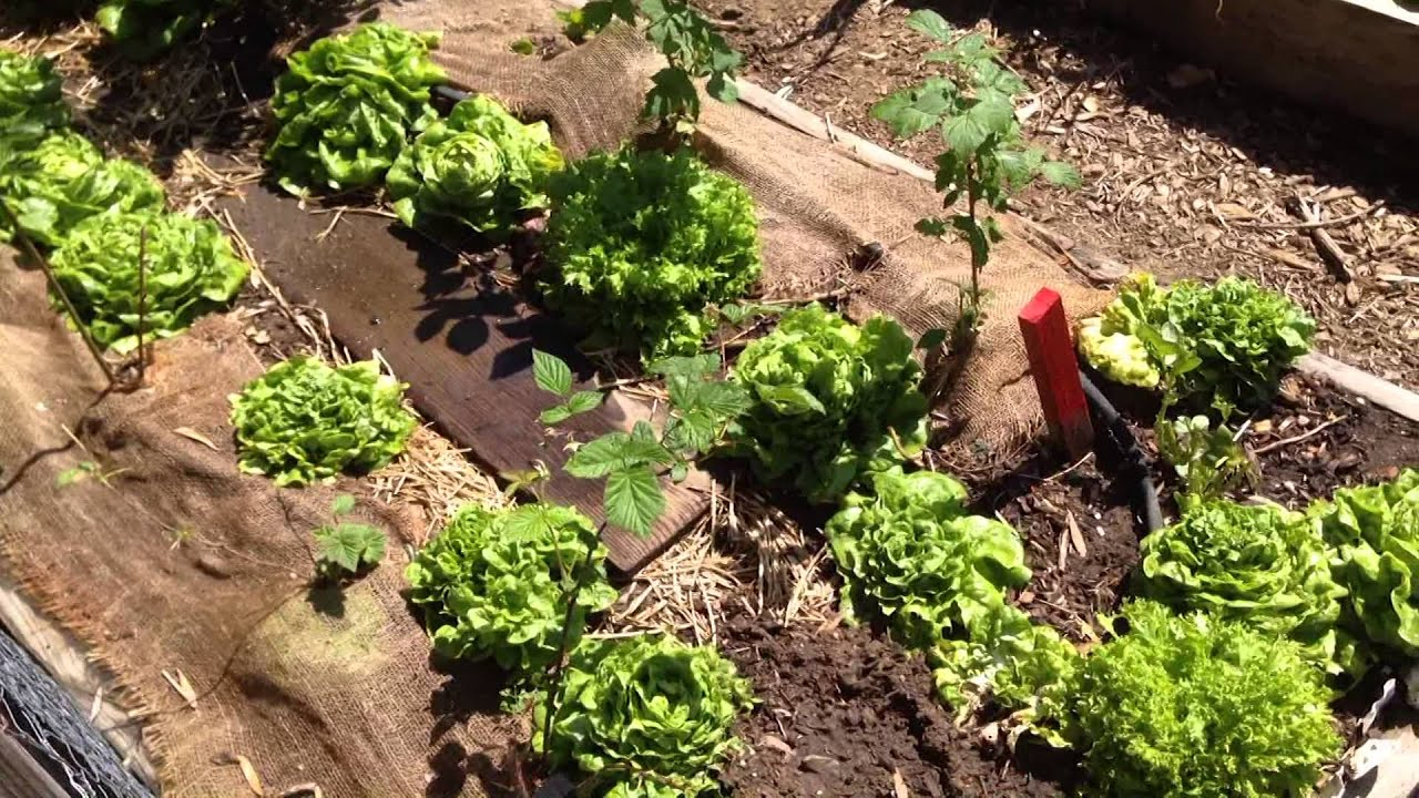 Tips And Tricks For April In The Vegetable Garden