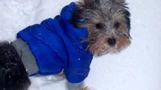 купить одежду для собак в омске