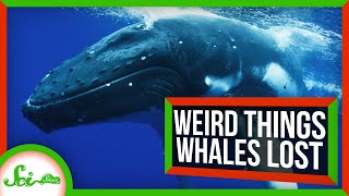 Weird Things Whales Lost on Their Journey to the Sea