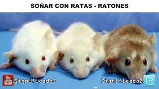 Significado de Soñar con Ratas 🐭 Ratones ✔