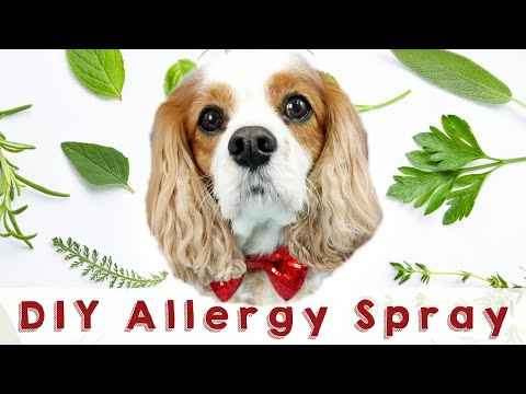 Home Remedies for Dog Allergies | Itchy Dog Home Remedy  DIY Natural Dog Allergy Spray