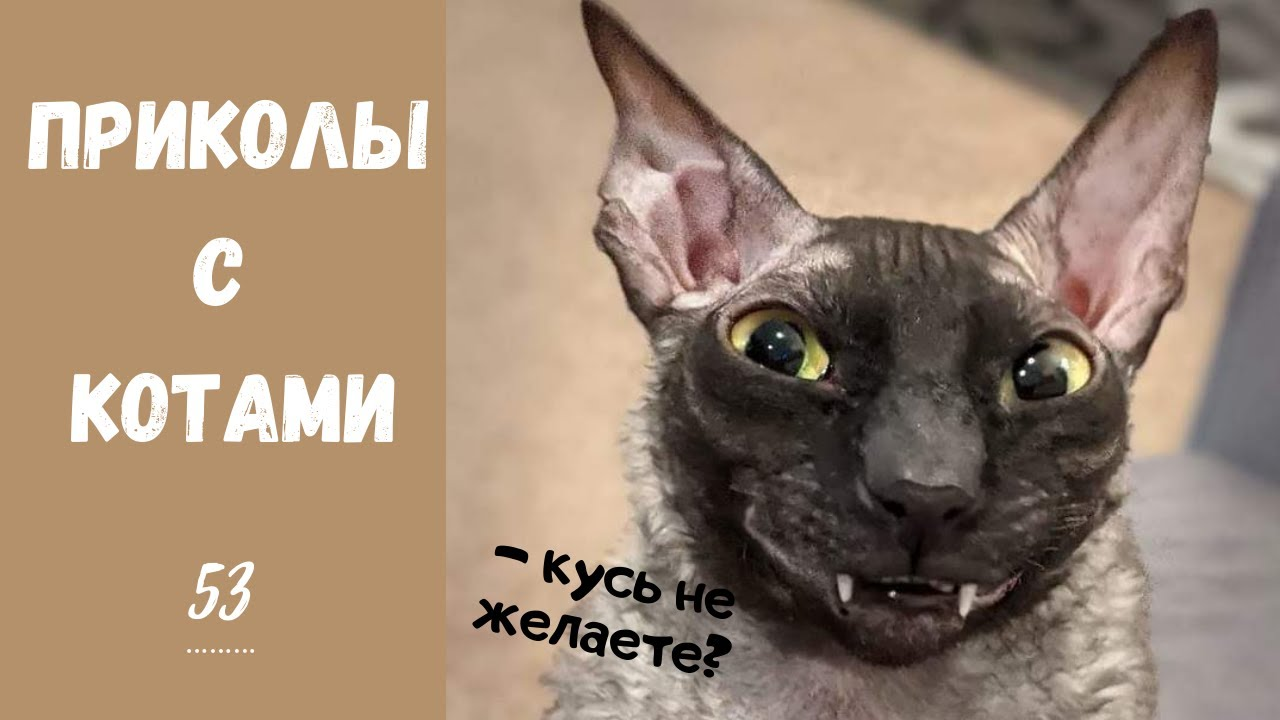 Смешные КОТЫ КОТИКИ КОТЯТА Приколы с животными #53
