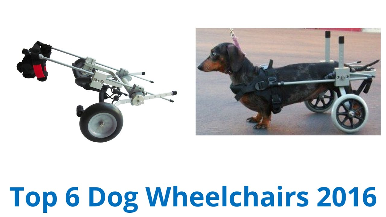 6 Best Dog Wheelchairs 2016