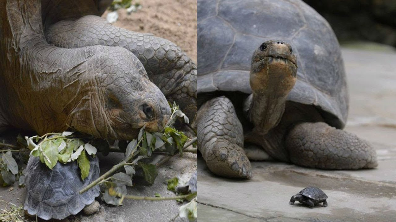 this-80-year-old-tortoise-stunned-keepers-when-she-laid-the-most-wonderful-surprise