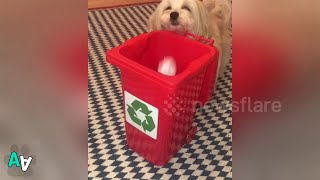 Small Dog Helps to Recycle with her own Little Wheelie Bin