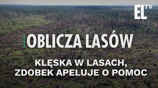 Klęska w lasach, Zdobek apeluje o pomoc   Zapowiedź Obliczy lasów #34