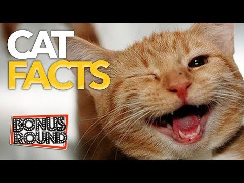 FUNNY! CAT FACTS