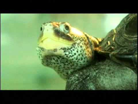 The Chances of the World Changing - The Chances of the World Changing - A Collection of Turtles (1/2)