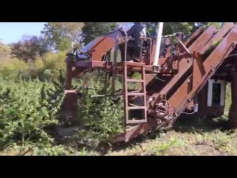 Hemp Harvesting, Processing And Drying Equipment