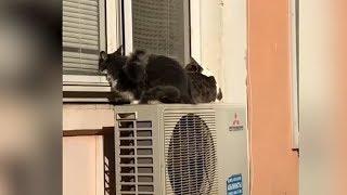 Краснодарская полиция разберется в истории с выброшенными с балкона котами