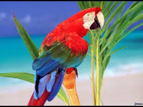 Der Papagei singt und tanzt Lustige Tiere Lustige Videos