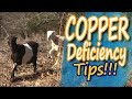 Copper Deficiency in Goats: How to Identify and Treat It (2018)