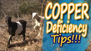 Copper Deficiency in Goats: How to Identify and Treat It