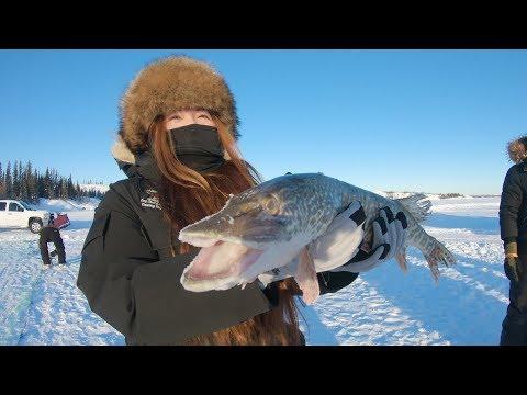 Epic Adventure In Yellowknife, Northwest Territories!