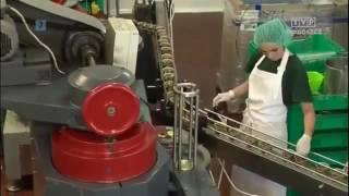 Работа на предприятии консервации грибов и ягод