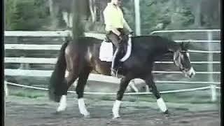 Pablito - Eurequine LLC Stallion