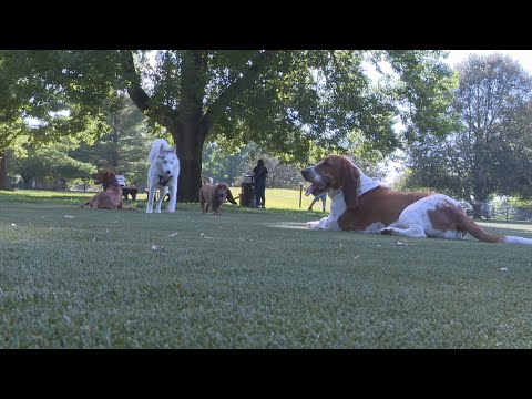 Broad Ripple Bark Park Opens In Indianapolis