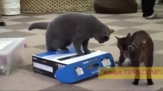 Смешные ролики с котами!