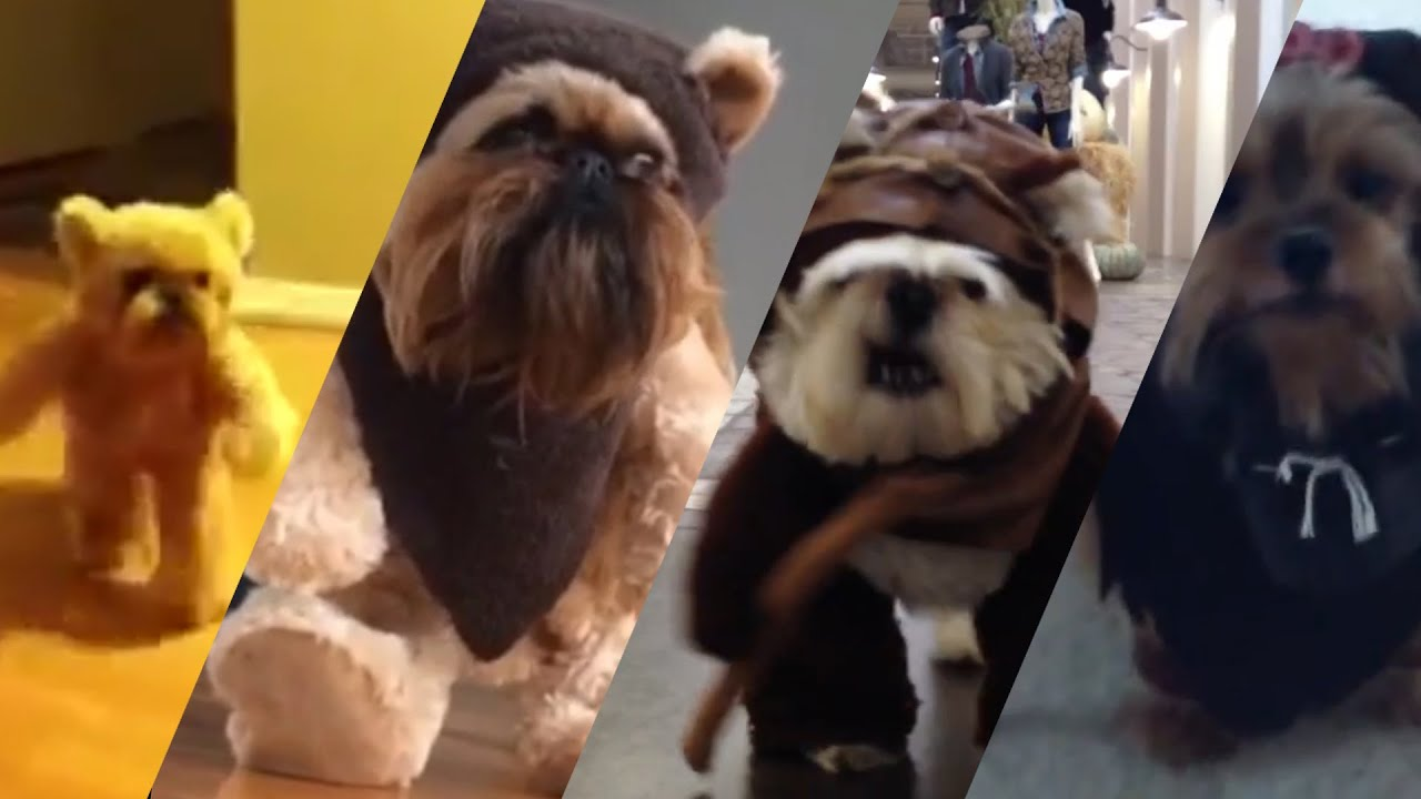 Ewok Dog Compilation Very Cute Youtube