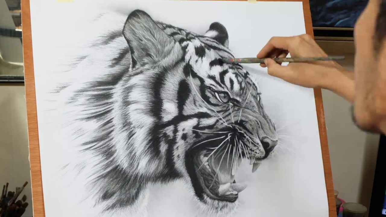 drawing pencil process to draw a tiger by toto ms youtube
