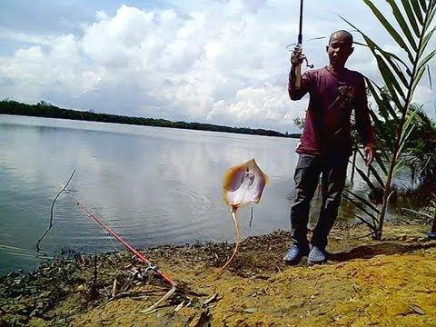 Mancing di Pinggir sungai Muara Badak   Strike Ikan Pari ...Badak Laut
