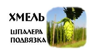 Свой Хмель для Пива | Шпалера | Подвязка(, 2017-05-01T18:17:05.000Z)